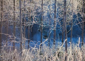 aspen frost